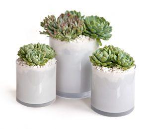 Darrons-Succulents